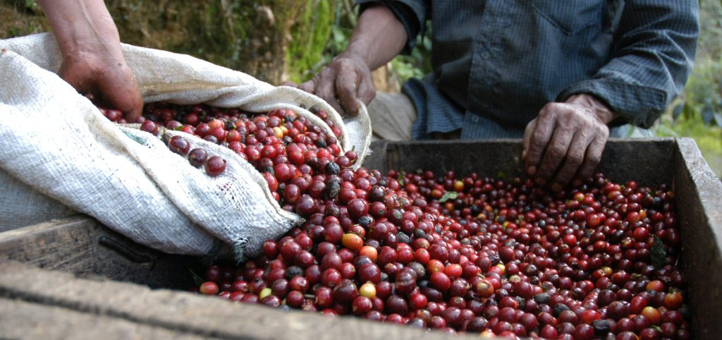 A World Without Coffee: The Story Behind a Possible Impending Coffee Crisis